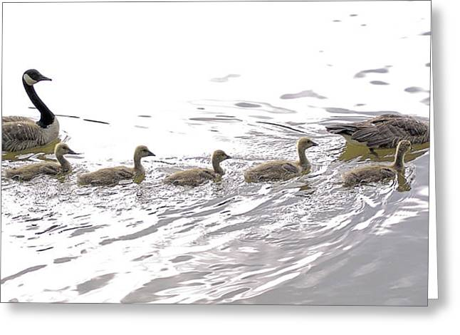 Family Outing Greeting Card by Brian Wallace
