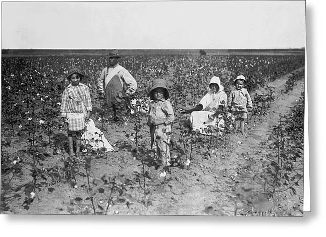 Family Picking Cotton Greeting Card by Underwood Archives