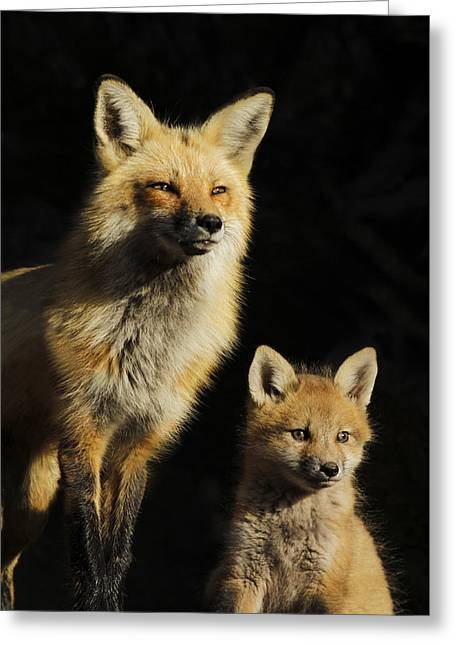 Family Portrait Greeting Card by Mircea Costina Photography