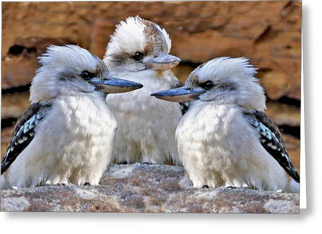 Family Ties - Kookaburra Style Greeting Card