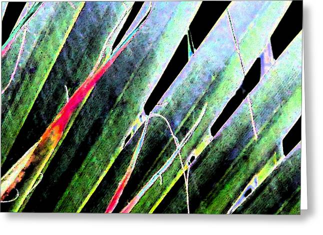 Fan Palm On Wet Day Greeting Card