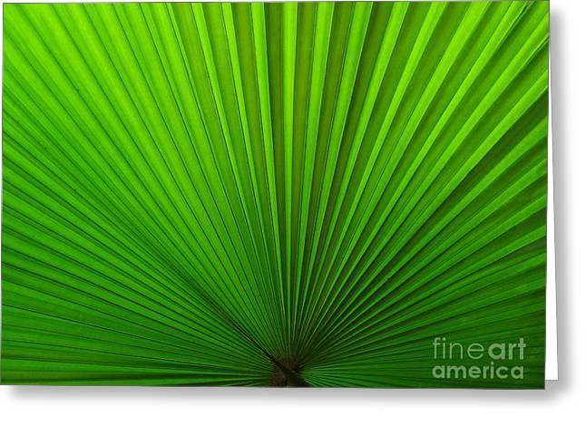 Fan Palm Greeting Card by Ranjini Kandasamy