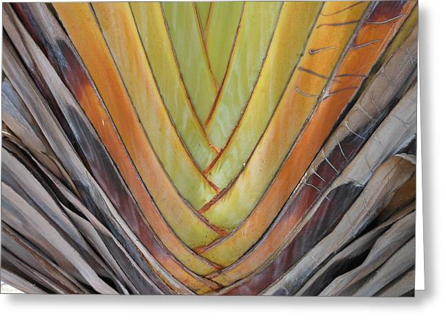 Fan Palm Trunk Greeting Card by Kay Gilley