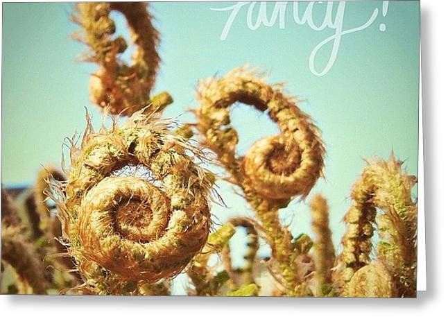 Curly Fern Fronds Greeting Card by Blenda Studio