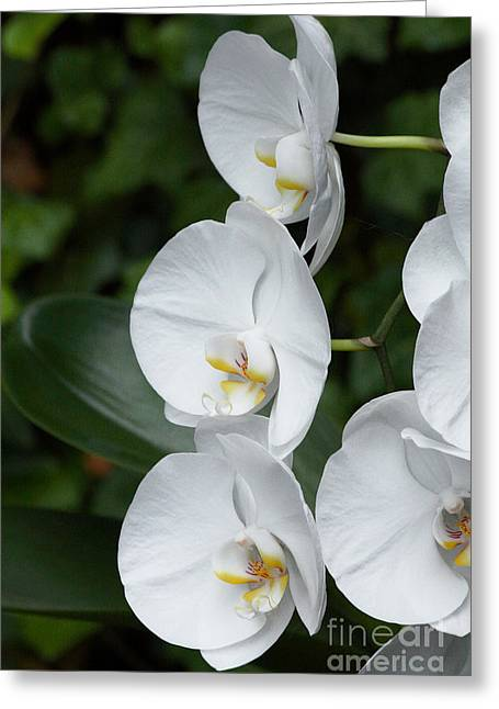 Fancy Orchid Greeting Card
