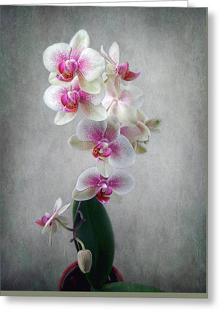 Greeting Card featuring the photograph Fancy Orchids by Louise Kumpf