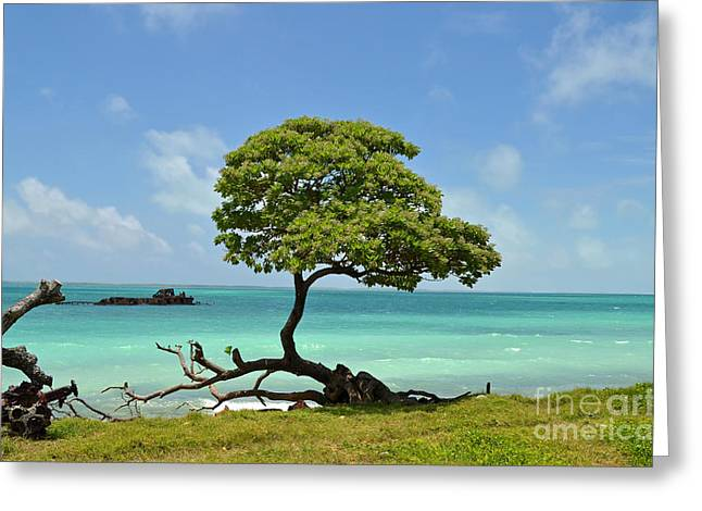 Fanning Tree On Beach Greeting Card