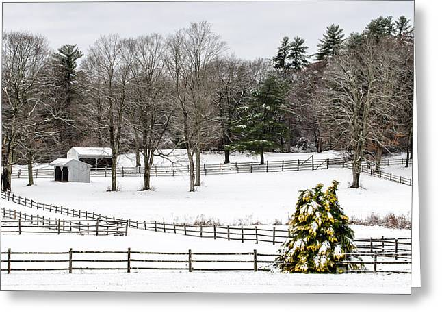 Greeting Card featuring the photograph Horse Farm And The Tree by Mike Ste Marie