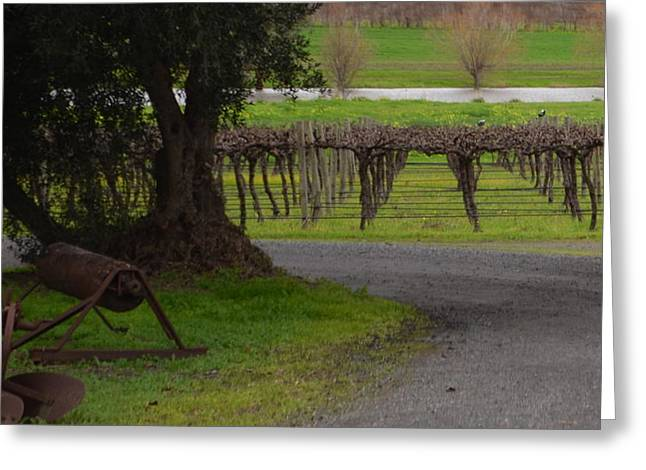 Farm And Vineyard Greeting Card by Cheryl Miller