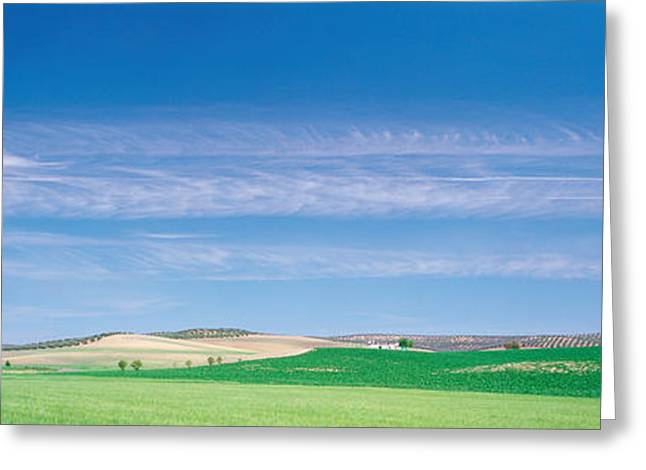 Farm Audausia Cordoba Vicinity Spain Greeting Card by Panoramic Images