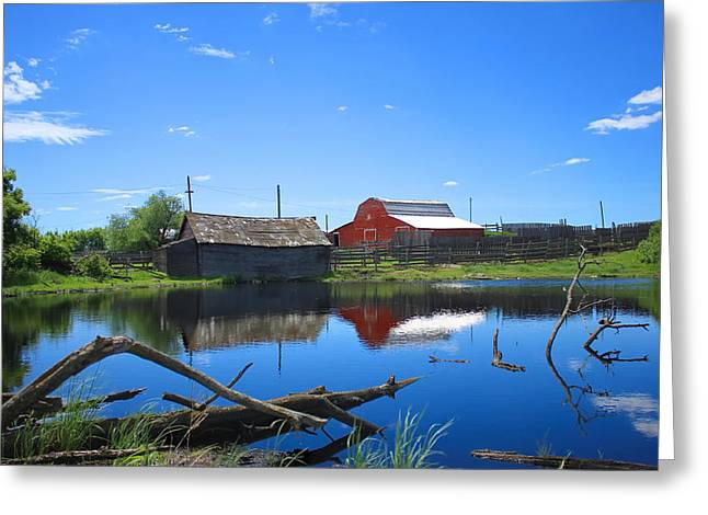 Farm Buildings And Pond. Greeting Card