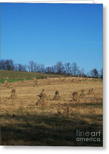 Greeting Card featuring the photograph Farm Days by Sara  Raber
