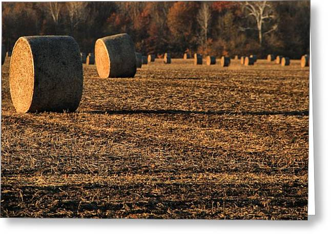 Farm Fields In October Greeting Card by Dan Sproul