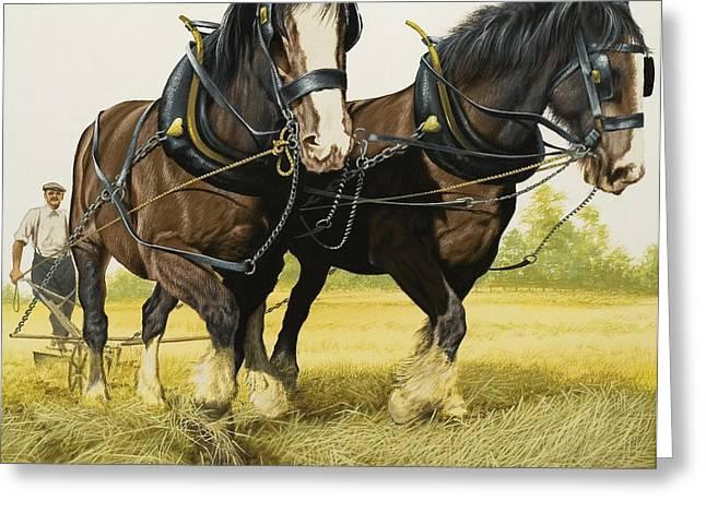 Farm Horses Greeting Card by David Nockels