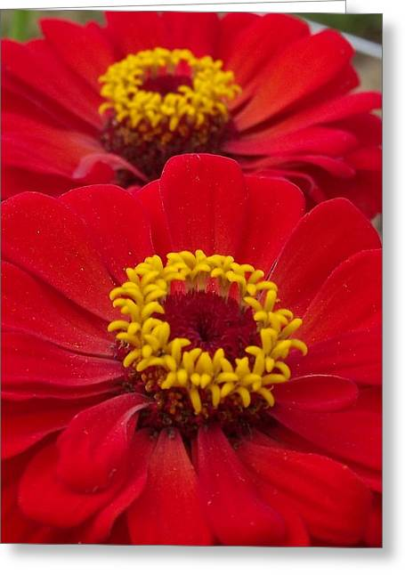 Farm Stand Flowers Greeting Card