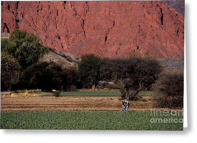 Farmer In Field In Northern Argentina Greeting Card