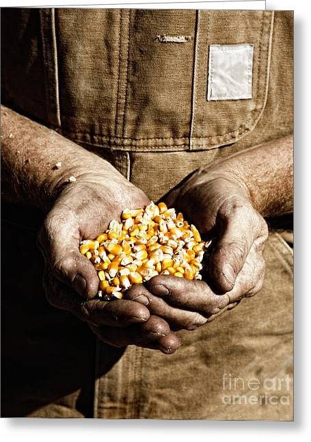 Farmer's Hands With Seed Corn Greeting Card