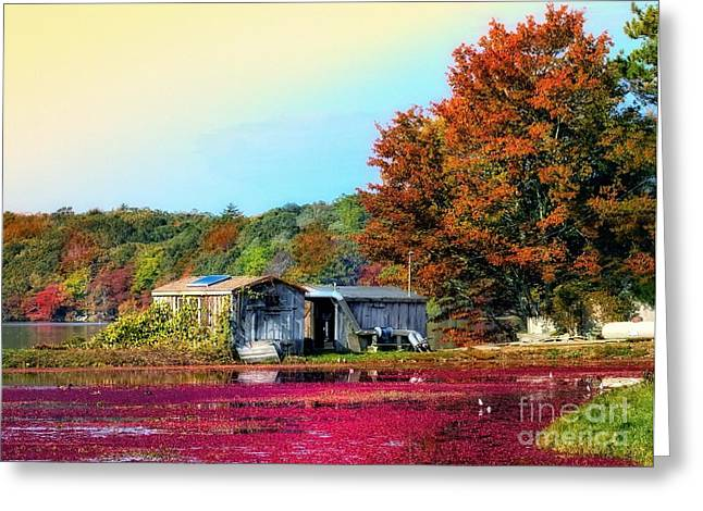 Greeting Card featuring the photograph Farming Cranberries by Gina Cormier