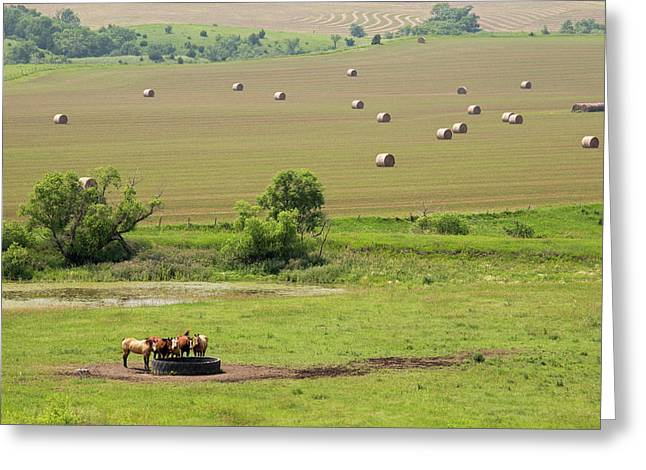 Farming In South Dakota Greeting Card by Jim West