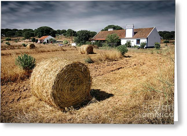 Farmland Greeting Card by Carlos Caetano