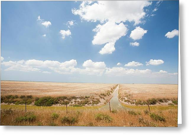 Farmland In The Coto Donana Greeting Card