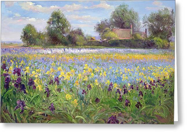 Farmstead And Iris Field Greeting Card