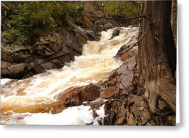 Fast Water And Cedars Greeting Card by Sandra Updyke