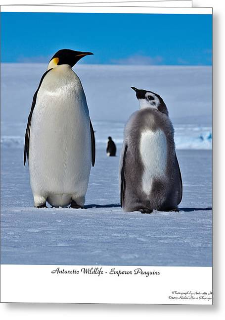 Father And Son Greeting Card by David Barringhaus