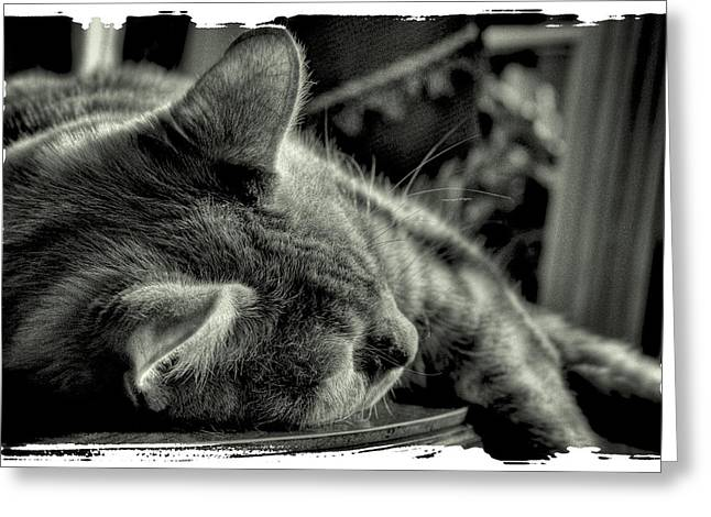 Fatigued Feline Greeting Card by David Patterson