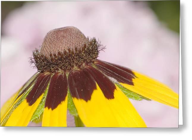Favorite Flower Greeting Card by Robert Culver