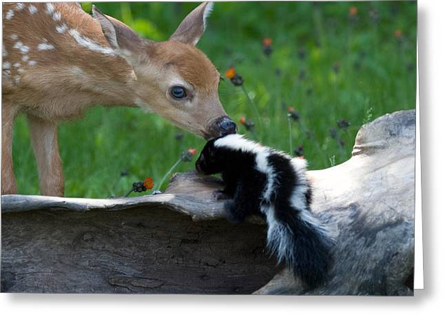 Fawn And Baby Skunk Greeting Card