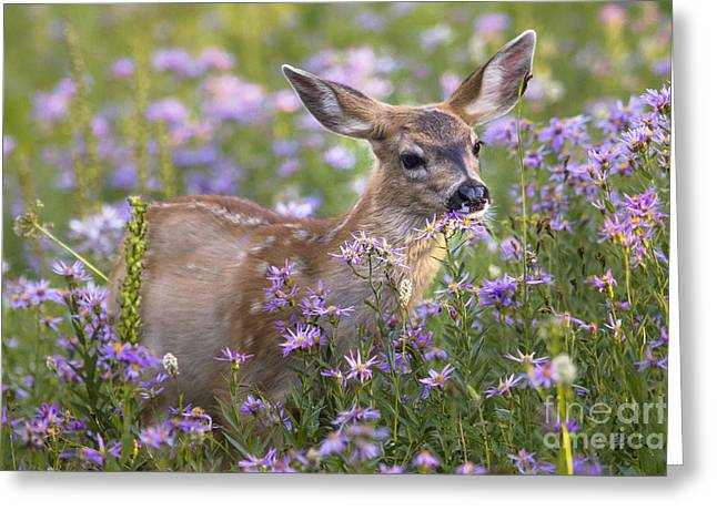 Fawn In Asters Greeting Card by Sonya Lang