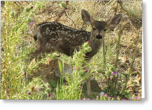 Fawn In Thistles Greeting Card by Feva  Fotos