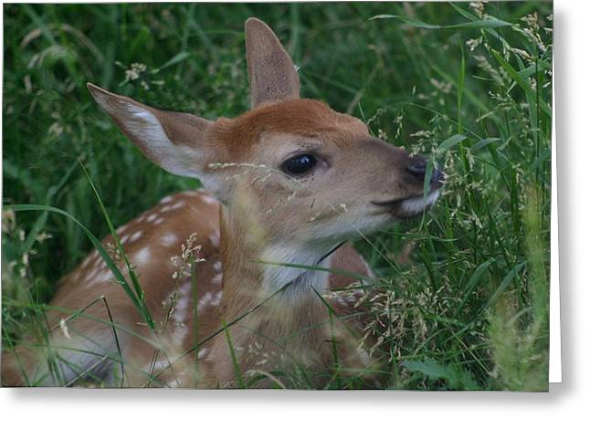Fawn In Weeds Greeting Card