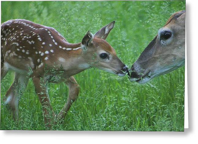 Fawn Kiss Greeting Card