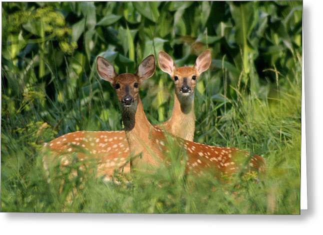 Fawns Crossed Greeting Card