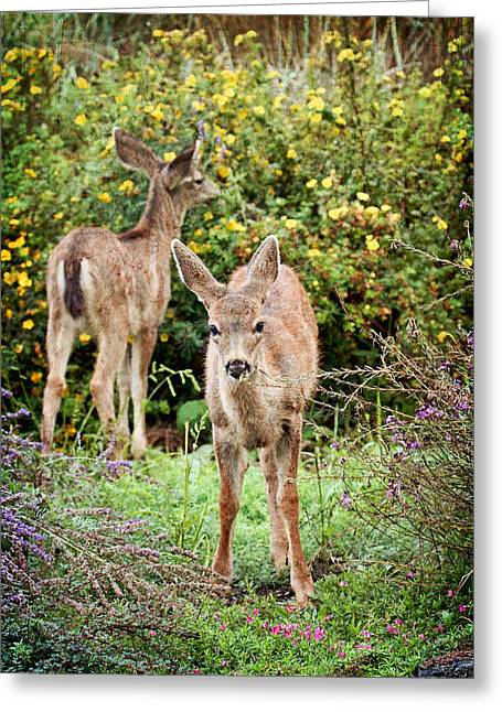 Greeting Card featuring the photograph Fawns Eating Flowers by Peggy Collins