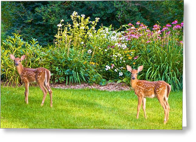 Fawns In The Afternoon Sun Greeting Card