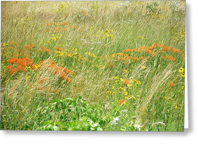 Fcma Meadow - Cape Cod - Barnstable County - Massachusetts Greeting Card by Mother Nature