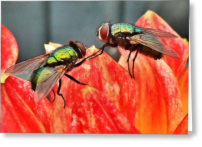 Fear Of Flying Greeting Card by Steve Taylor