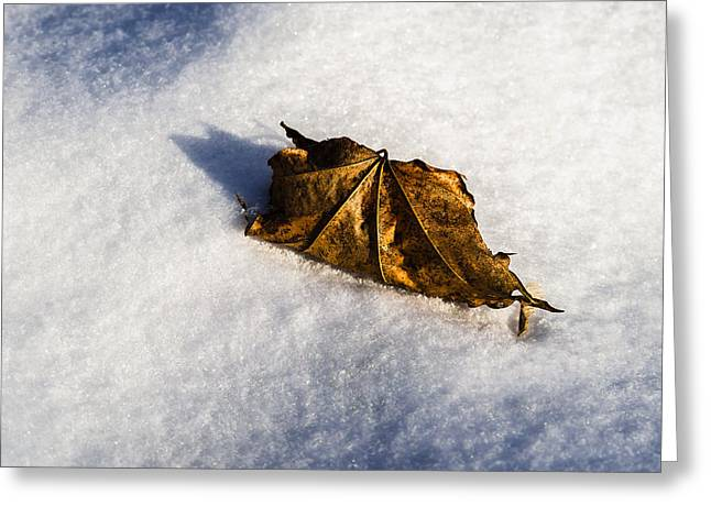 Feather Bed Of Snow Greeting Card by Alexander Senin
