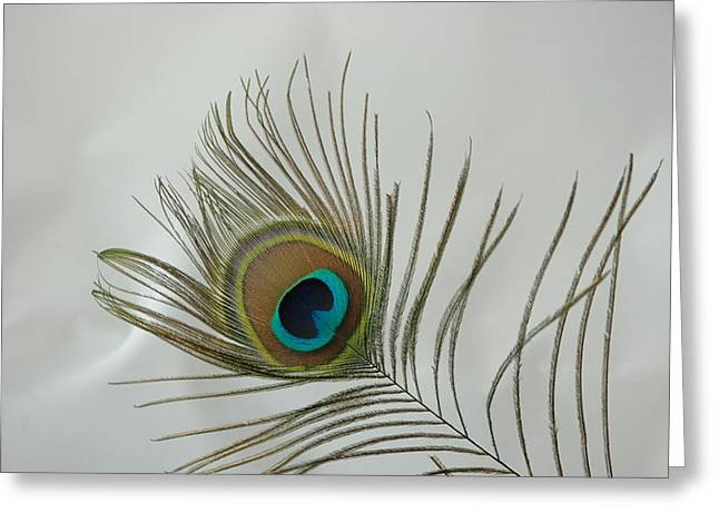 Greeting Card featuring the photograph Feather by David Armstrong