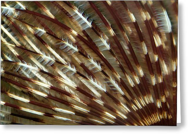 Feather Duster Worm Abstract Greeting Card