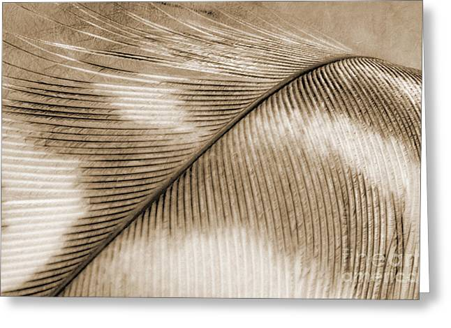 Feather - Sepia Greeting Card by Natalie Kinnear