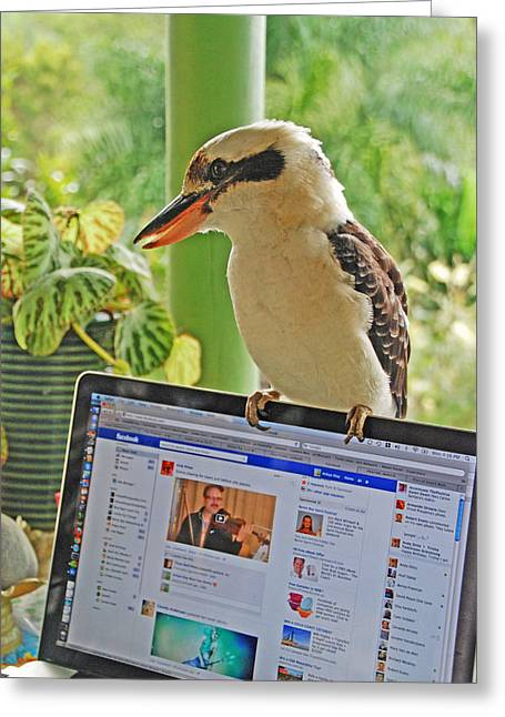 Feathered Facebook Fan Greeting Card