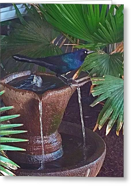 Feathered Fountain  Greeting Card by Joetta Beauford
