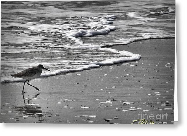Feathered Friend At The Beach Greeting Card