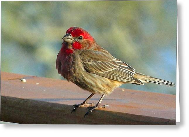 Feathered Friend Greeting Card by Cindy Croal