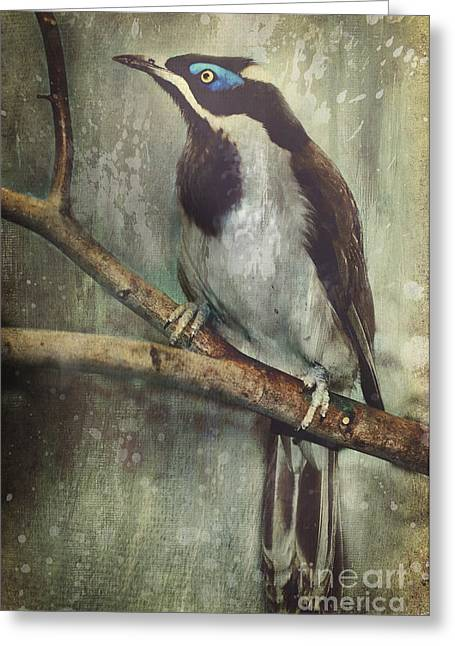 Feathers And Splatters Greeting Card by Lyndsey Warren