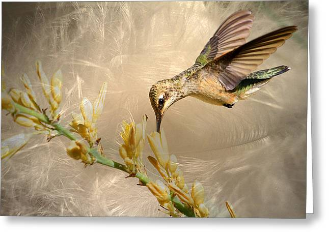 Feathers Greeting Card by Donna Kennedy